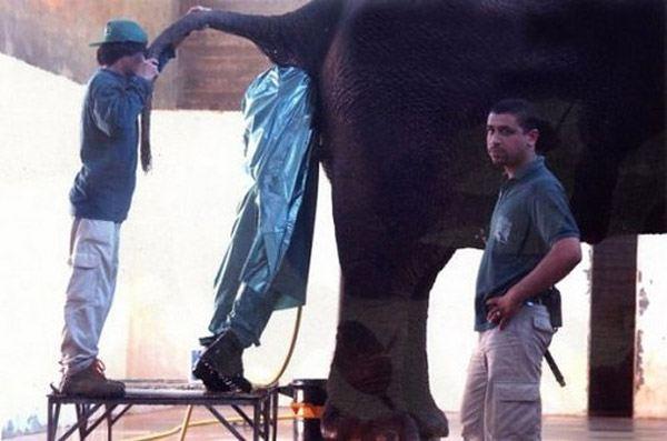 Guy In Elephant Worst Jobs