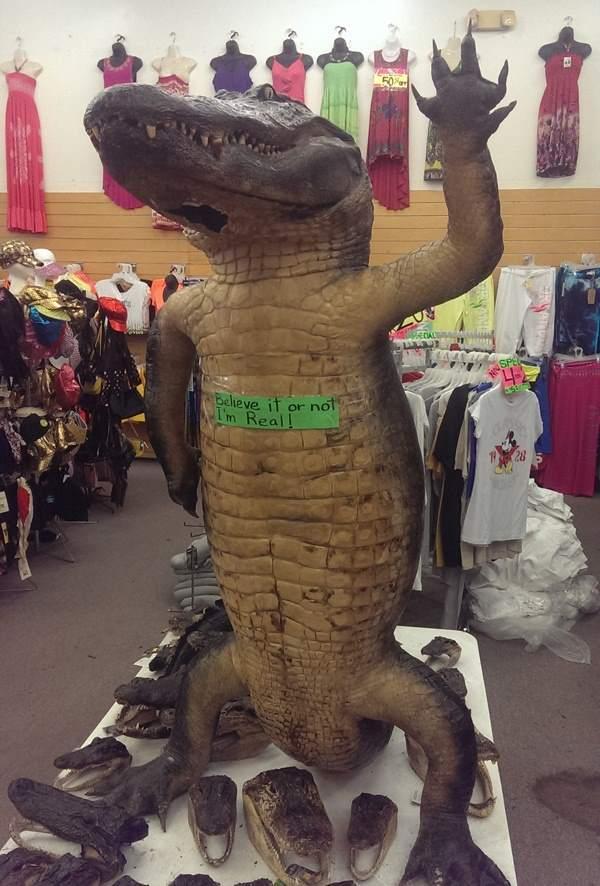High Five Gator