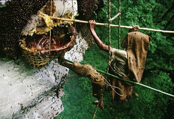 Honey Collector