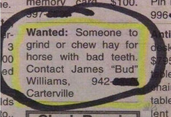 Horse Chrew Ad