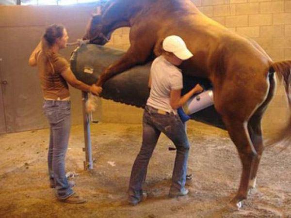 Horse Semen Collector