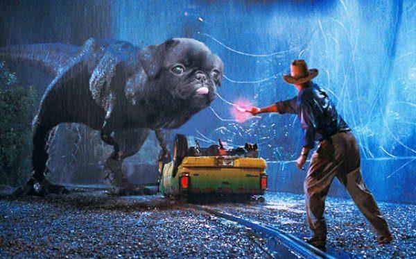 Jurassic Pug Funny Photoshops