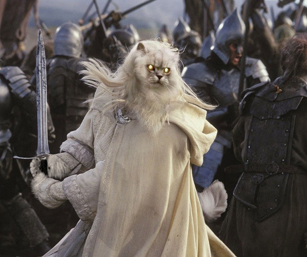 Lord Of Rings Cat Dumb Photoshops