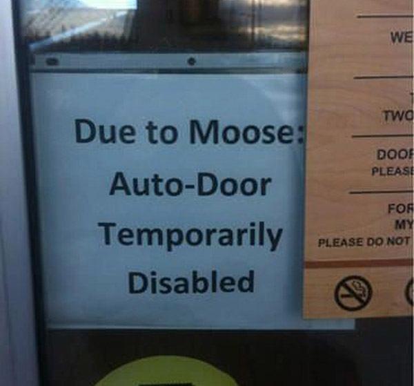 Moose Auto Door