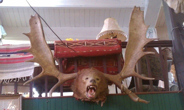 Moose Bear