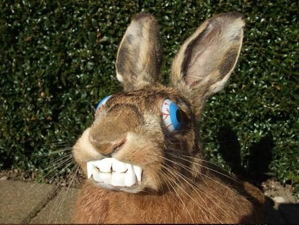 Natural Eyes Rabbit
