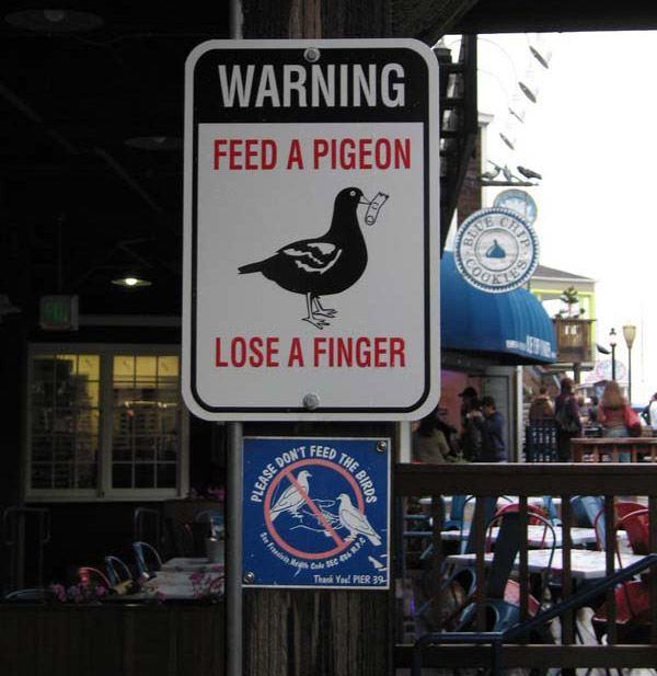 Pigeon Finger