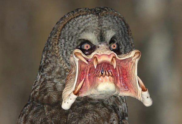 Predator Owl