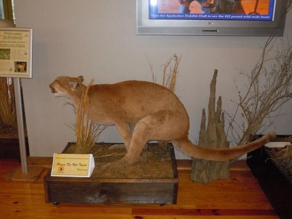 Puma Dump