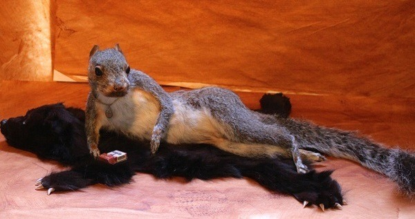 Mátame, camión! (El Tópic de la Taxidermia Chunga) - Página 13 Sexy-squirrel-taxidermy-fails