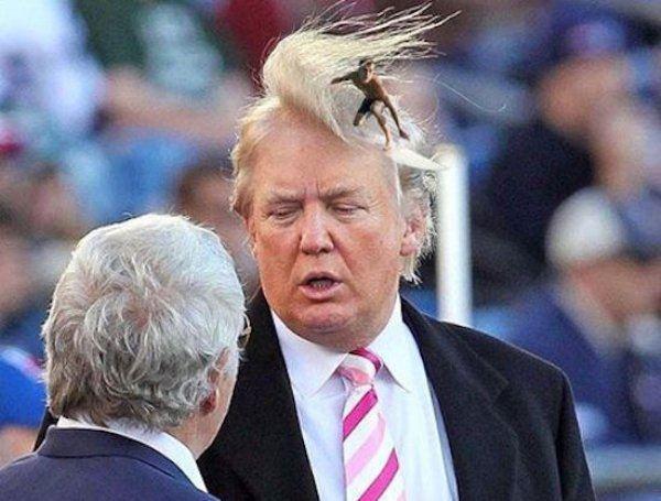 Trump Hair Wave