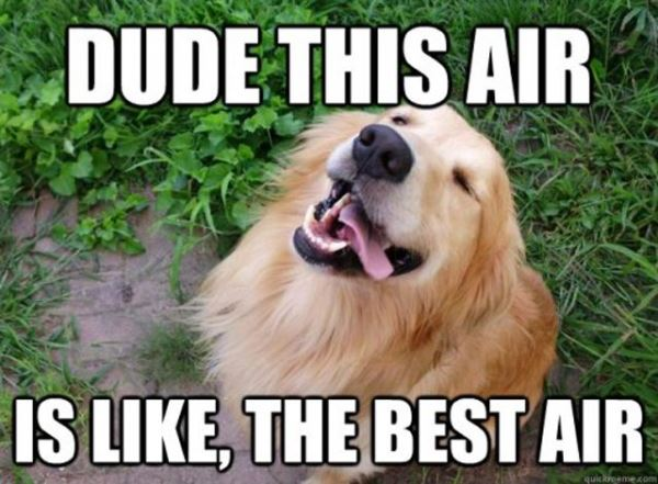 Best Air Dog Memes