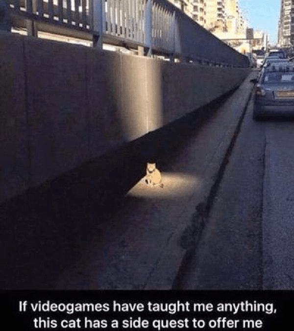 Cat Side Quest