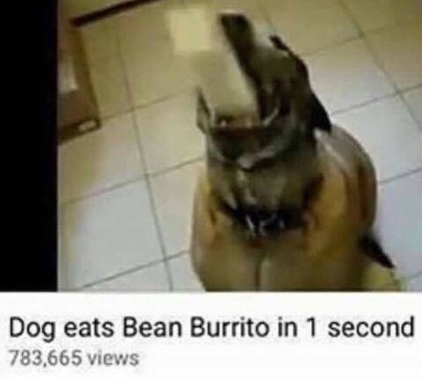 Dog Eats Burrito