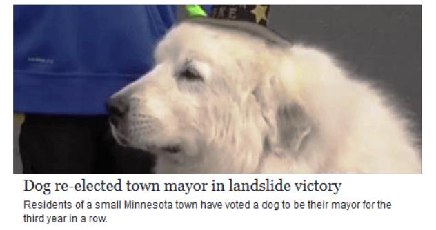 Dog Elected Mayor