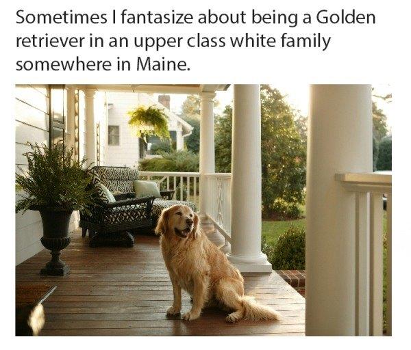 Dog Memes Fantasies