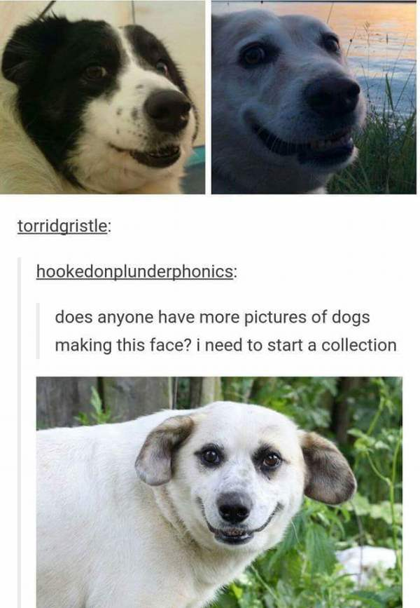Dogs That Make That Face