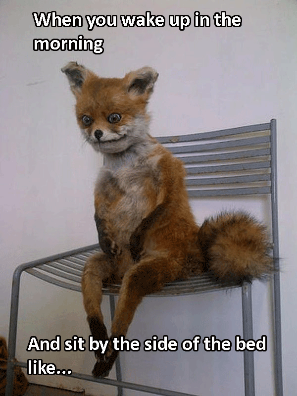 Fox Sitting On Chair