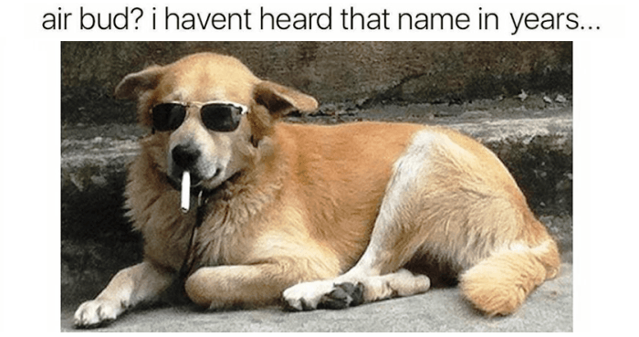 Funny Dog Memes: 48 Funny Dog Memes That Are Equal Parts Hilarious And Adorable