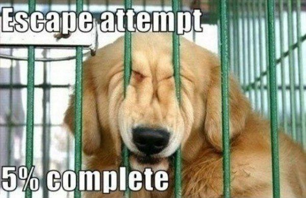 Funny Dog Memes Escape Attempt