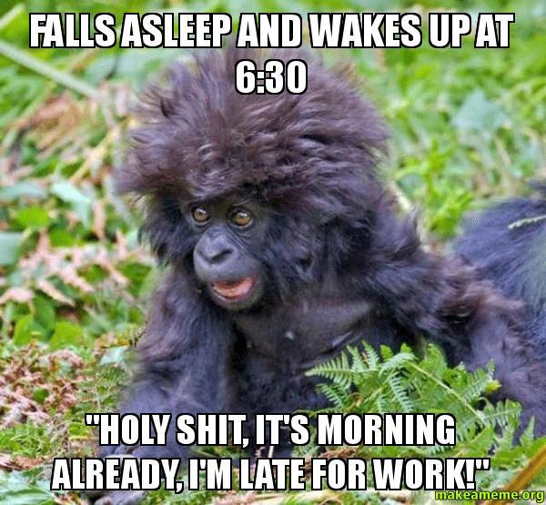 Late Baby Gorilla