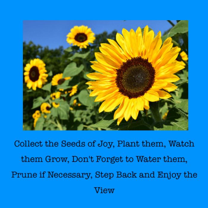 Seeds Of Joy