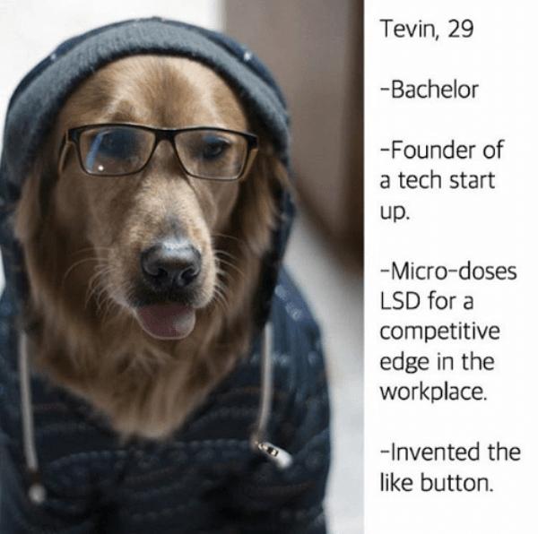 Start Up Dog