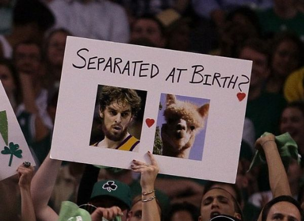 Pau Gasol Llama Birth Funny Sports Signs