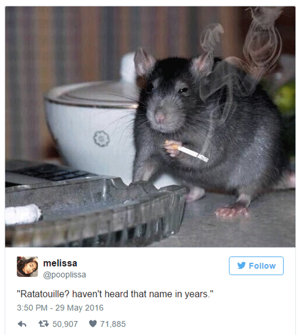 Rat Smoking Cigarette