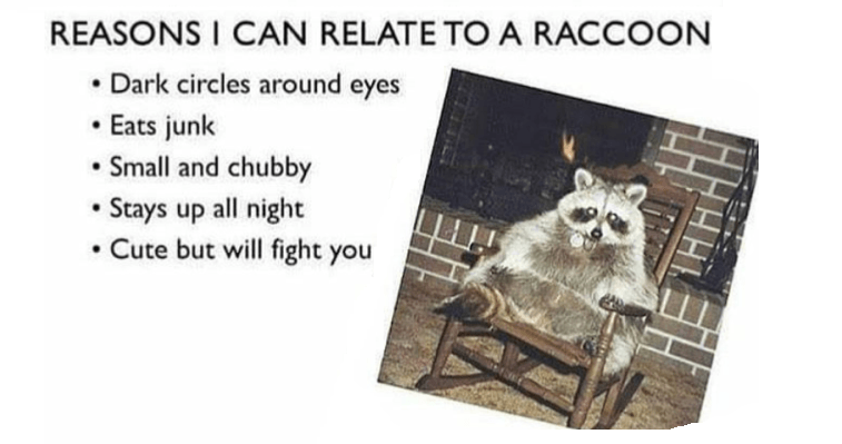 Relating To A Raccoon