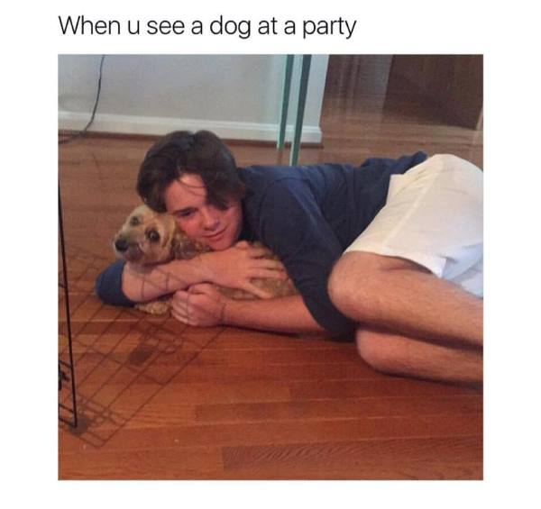 Seeing A Dog At A Party Meme