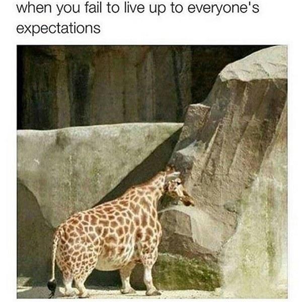 Stumpy Giraffe