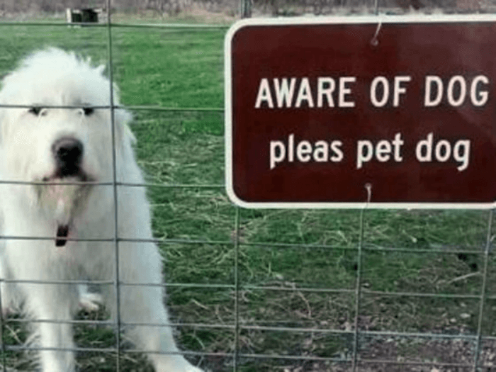 Aware Of Dog