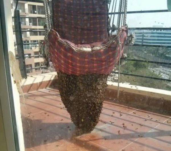 Bee Chair