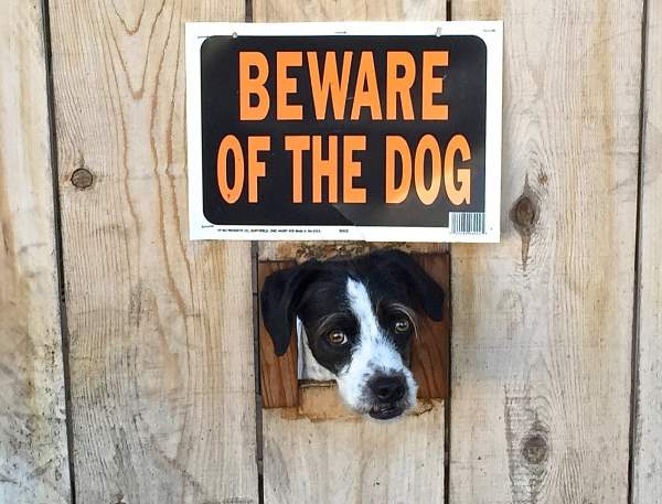 Beware Of Dog He Is Ferocious