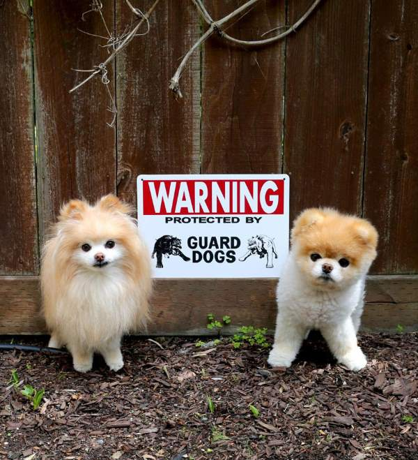 Beware Of Fluffballs