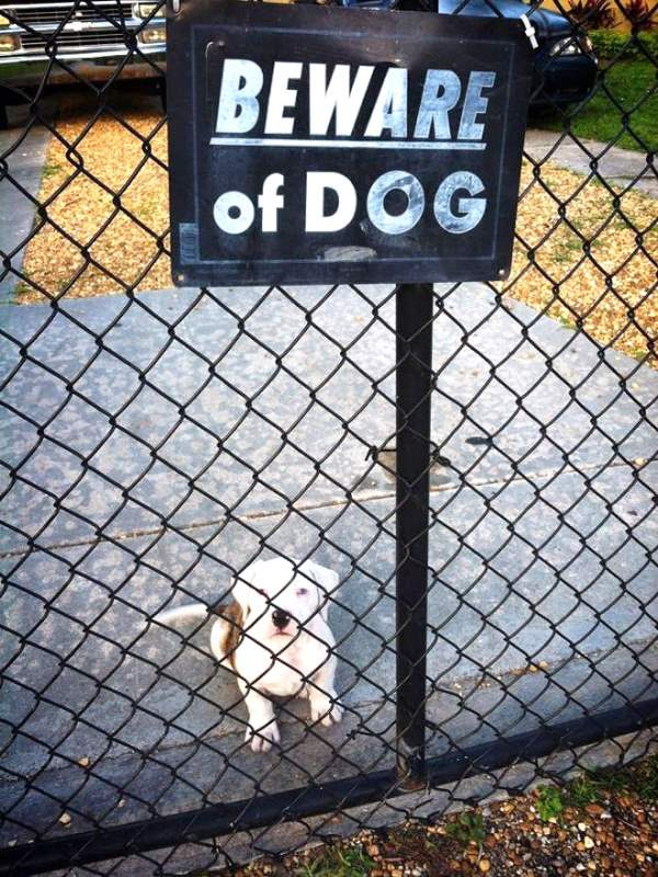 Beware Of Puppy