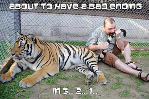 Biting Tiger Tail