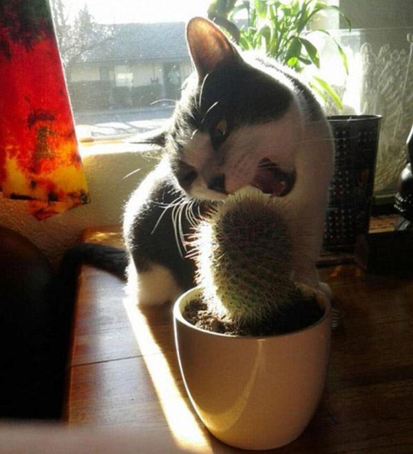 Cat Biting Cactus