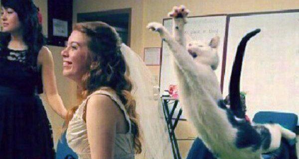 Cat Getting Ready To Shread Wedding Dress