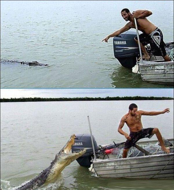 Croc And Idiot2