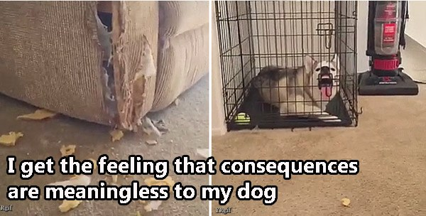 Dog Consequences