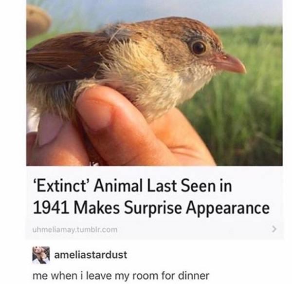 Extinct Animal Appearance