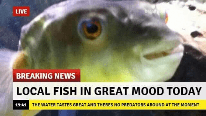 Fish In Great Mood