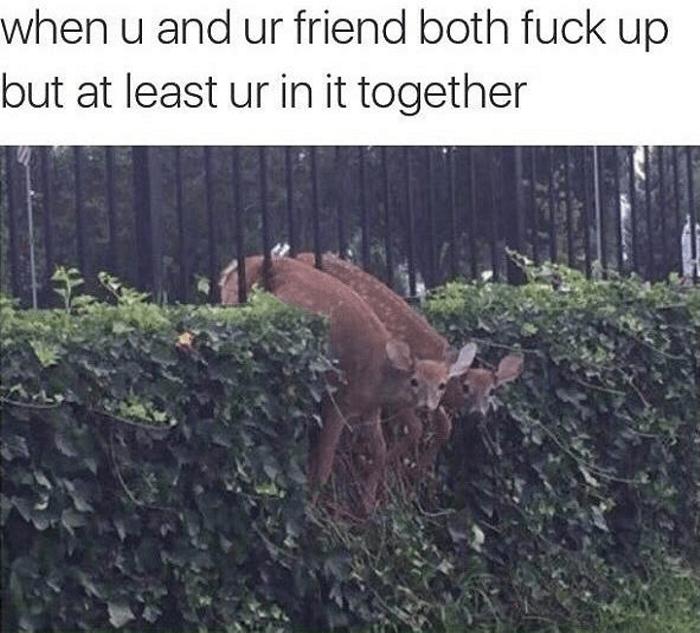 Fuck Ups Happen In Friendship
