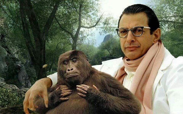 Funny Jeff Goldblum Pictures