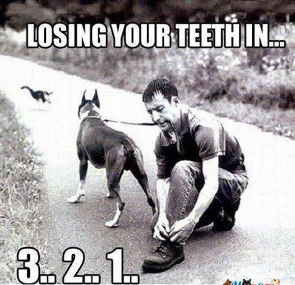 Loosing Teeth Dog
