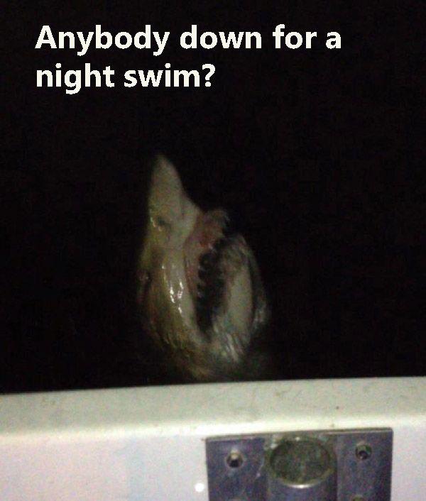 Nightshark