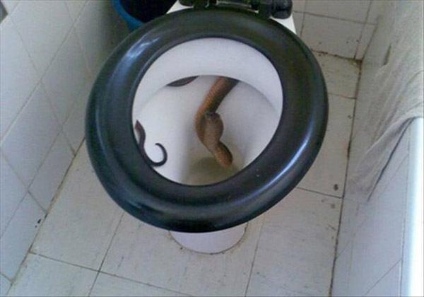 Toilet Cobra