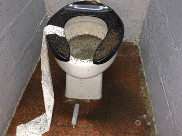 Toilet Million Bugs